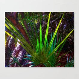 Sunlight comes to the forest. Canvas Print