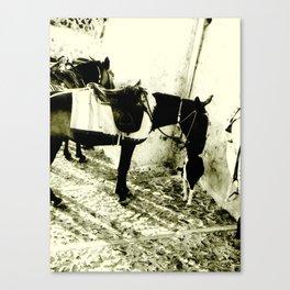 Donkey and Dog 1 Canvas Print