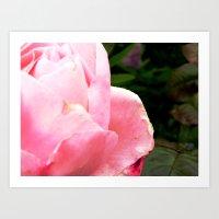 rose 4 u Art Print
