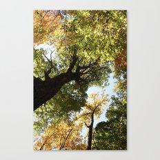 Fall Canopy - Woodland Trees Canvas Print