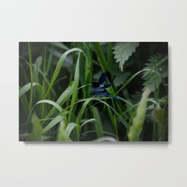 Blue Dragonfly Metal Print