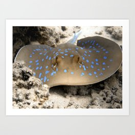 Blue Spotted Ray Art Print
