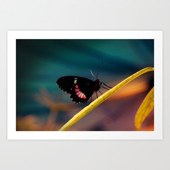 Butterfly#2 Art Print
