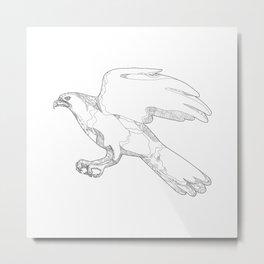 Northern Goshawk Swooping Doodle Art Metal Print