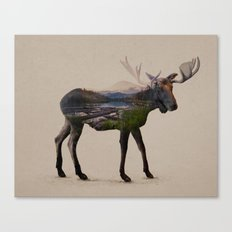The Alaskan Bull Moose Canvas Print