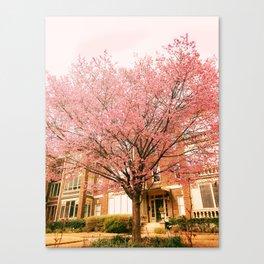 Spring Blooms 2 Canvas Print
