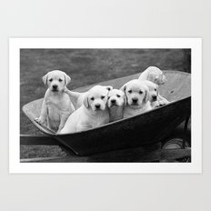 Labs Puppies In A Wheelbarrow Art Print