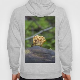 Fungal remains Hoody