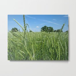 Wheat Field 2 Metal Print