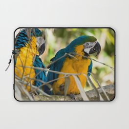 Parrots couple in the tree tops Laptop Sleeve
