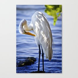 Great Egret Grooming Canvas Print