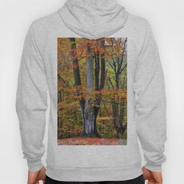 The Beauty of Fall Hoody