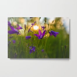 Wild flowers at sunset against the light Metal Print
