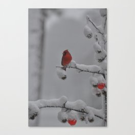 Lone Red Cardinal in the Snow Canvas Print