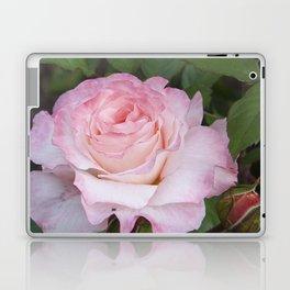 Pink Blush Rose Laptop & iPad Skin