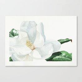 Watercolor Magnolia Blossom Canvas Print