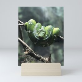 GREEN SNAKE ON GRAY TWIG IN SELECTIVE FOCUS PHOTOGRAPHY Mini Art Print