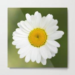 Beautiful Daisy Natural Green Background #decor #society6 #buyart Metal Print