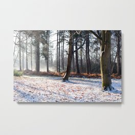 Winter in the woods, Stapleford Woods Metal Print