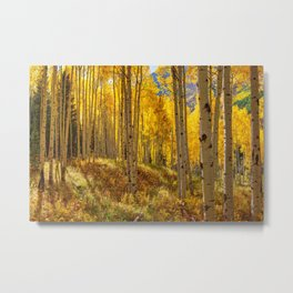 Autumn Aspen Forest in Aspen Colorado USA Metal Print