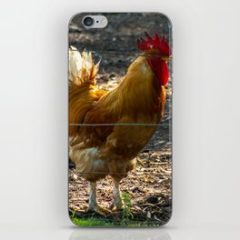 Brown rooster standing in the corral. iPhone Skin