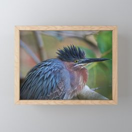 The Green Heron at Ding III Framed Mini Art Print