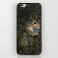 squirrel iPhone & iPod Skins featuring Squirrel by Judith Lee Folde Photography & Art