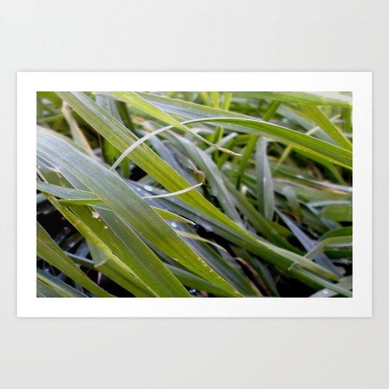 water and greenery Art Print
