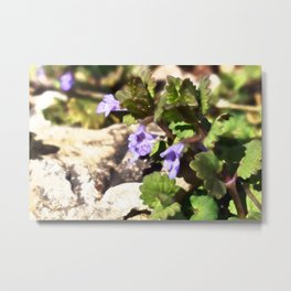 Ground Ivy 03 Metal Print