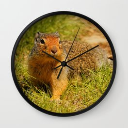 Twitchy Nosed Columbian Ground Squirrel Wall Clock