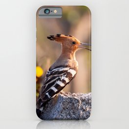 Stunning Gorgeous Exotic Indian Hoopoe In Wild Hyderabad India Close Up Ultra HD iPhone Case