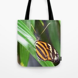 Alluring Butterfly Tote Bag