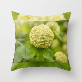 Viburnum opulus Roseum inflorescence Throw Pillow