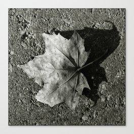 'Maple Leaf' Canvas Print