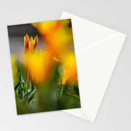 Color of tulips Stationery Cards