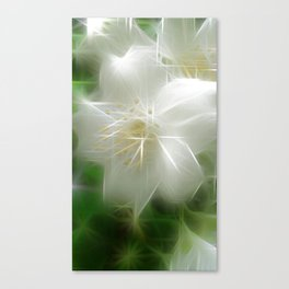 White Shiny Jasmine Canvas Print
