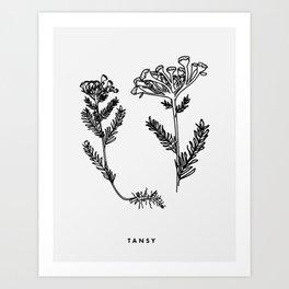 Tansy Botanical Art Print