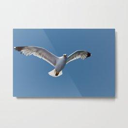 Albatros Metal Print