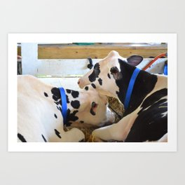 Pair of black and white cows 1 Art Print