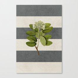 botanical stripes 5 -gray Canvas Print
