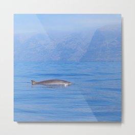Beaked whale in the mist Metal Print