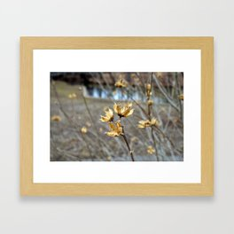 Flowers in the Winter Framed Art Print