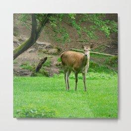 Soft eyes - deer in a clearing Metal Print