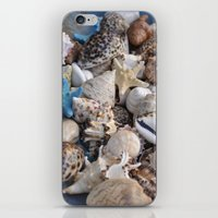 seashell iPhone & iPod Skins featuring Seashell by Sowthistle