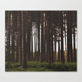 Moody Forest - Landscape and Nature Photography Canvas Print
