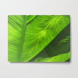 Tropical Green Metal Print
