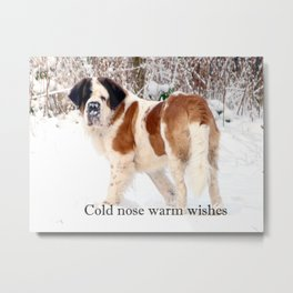 Snow sniffing St Bernard dog Metal Print