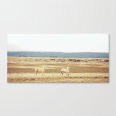Two Oregon Horses Canvas Print