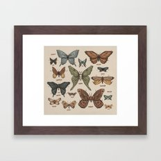 Butterflies and Moth Specimens Framed Art Print