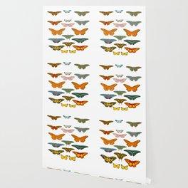 Vintage Scientific Illustration Of Colorful Butterflies Wallpaper